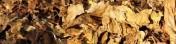 Liście tytoniu - IMPORT - BUŁGARIA - MOŁDAWIA