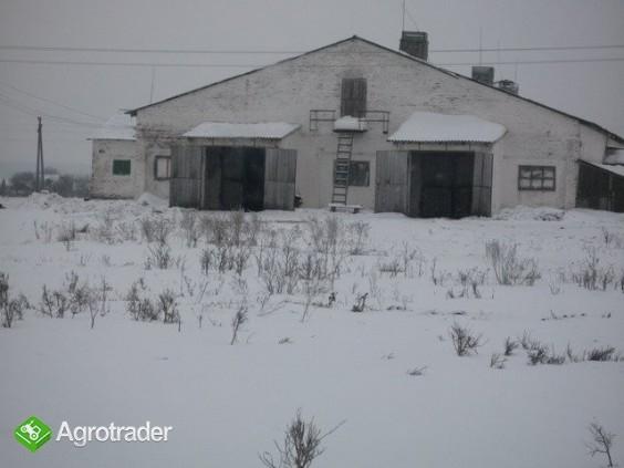 Ukraina.Gospodarstwo rolne,ferma trzody chlewnej. - zdjęcie 1