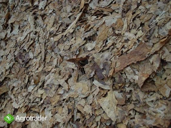 Tytoń VIrginia Burley liść strips - zdjęcie 1