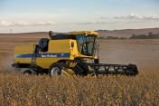 usługę koszenia zbóż, rzepaku , kukurydzy na ziarn
