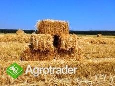 Ukraina.Grunty rolne.Biomasa zbozowa,rzepakowa itp - zdjęcie 1