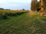Siedlisko 13 ha z budynkami w gminie Kampinos
