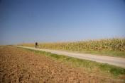 ziemia rolna, gospodarstwo rolne , 50 h , uprawian