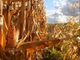 ziemia orna, gospodarstwo rolne, ziemia rolna 50h