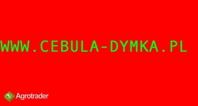Cebula dymka cebuli - 24 odmiany Rzetelna Firma - zdjęcie 1