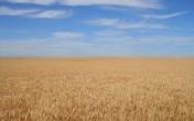 gospodarsto rolne, ziemia rolna, działka rolna 480