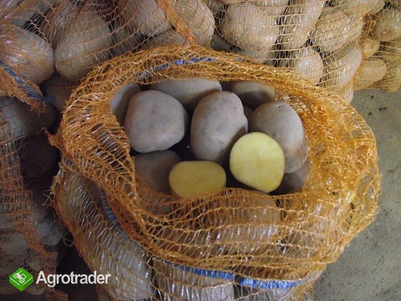 ziemniaki jadalne TAJFUN VINETA paczka 2,5kg