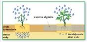 Alginit - nawóz do upraw ekologicznych 30 kg