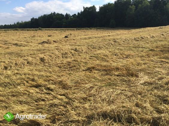 Siano - po desykacji traw nasiennych - zdjęcie 1