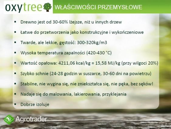 Oxytree - drzewo rosnących korzyści ( gleba: IV-VI klasa) - zdjęcie 2