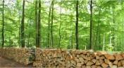 Ukraina.Zrebki lesne,tartaczne,kora,wierzba,wiklina.Od 4 zl/m3.