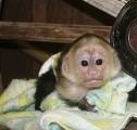 dzieci małpa szympans i dzieci na sprzedaż