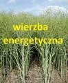 150 ha ( spółka ) - wierzba energetyczna