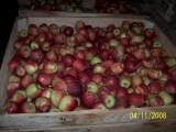 Kupimy jabłka kaliber 8+