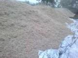 Wysłodki buraczane mokre,prosto zsypu świeżutkie Krasnystaw