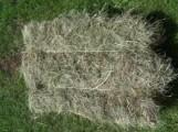 Siano w kostkach - 10 kg  HURT