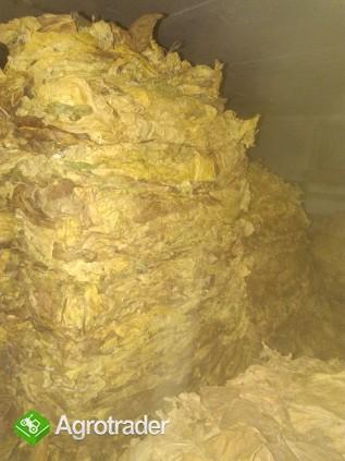 liście tytoniu Virginia tobacco leaves for sale price per kilo 1kg=3€ - zdjęcie 2