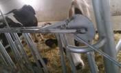stanowiska wygrodzenia kojce dla bydła opasów cieląt