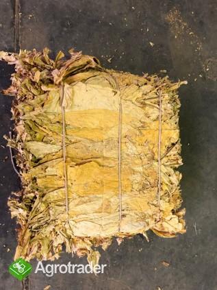 Liście tytoniu ORIENTAL VIRGINIA BURLEY - zdjęcie 4