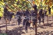 Weinwirtschaft zu verkaufen in Ungarn