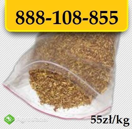 Tytoń papierosowy tylko 55zl/kg Wysyłka 24H! Pewny tytoń
