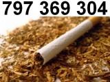 Tyton Korsarz, Tani tytoń jakości premium, szybka dostawa!