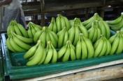 Warzywa i owoce prosto z Hiszpanii