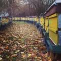 Sprzedam pszczoły (odkłady) maj