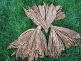 Sprzedam liście tytoniu Burley