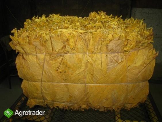 tytoń-liście tytoniu virginia i burley -klasa I - zdjęcie 2