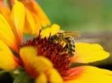 Przyjmę pszczoły z ulami lub bez oraz rójki