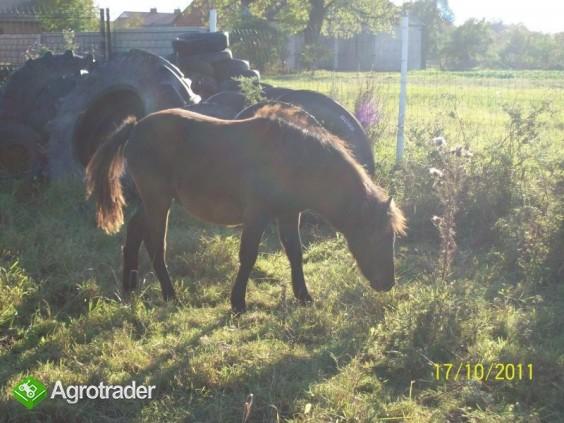 Młody koń, kuc!!Serdecznie polecam!!!!